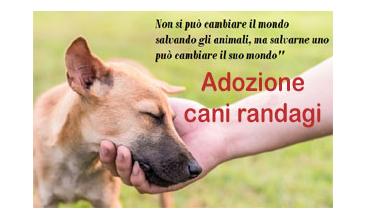 AFFIDO/ADOZIONE CANI RANDAGI