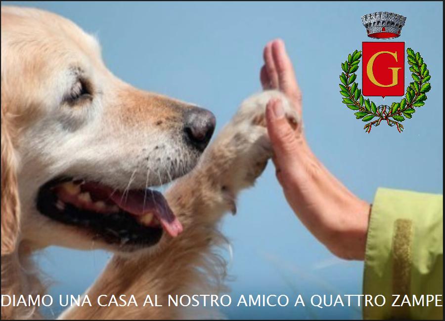 Misure a tutela degli animali d'affezione e prevenzione del randagismo